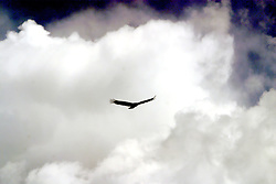 April 14 2006:  Images from a trip to Comlara Park.<br />
