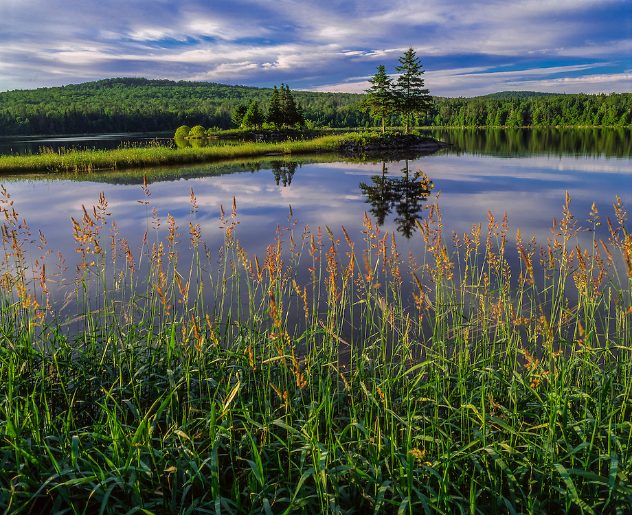 1st Connecticut Lake, with tall grass & spruce trees on island, summer, Pittsburg, NH