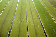 Nederland, Utrecht, Polder Achttienhoven, 11-02-2008; grazende schapen in het weiland, tussen Maartensdijk en Hollandsche Rading; wei, gras, veeteelt, winter, sloten, sloot, drainage, waterhuishouding, verkaveling, kavel, gras, groen, grasgroen..luchtfoto (toeslag); aerial photo (additional fee required); .foto Siebe Swart / photo Siebe Swart