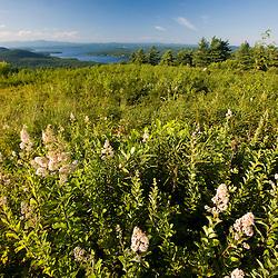 A field on a hill above Lake Winnipesauke in Alton, New Hampshire.