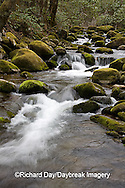 66745-038.20 Roaring Fork in spring, Roaring Fork Motor Trail, Great Smoky Mountain National Park, TN