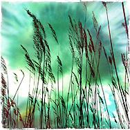 Hamburg Homage #076  Alster Photography, C-Print, 2014, 20 x 20 cm. © Nero Pécora/La pared