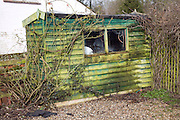Garden shed covered in green lichen