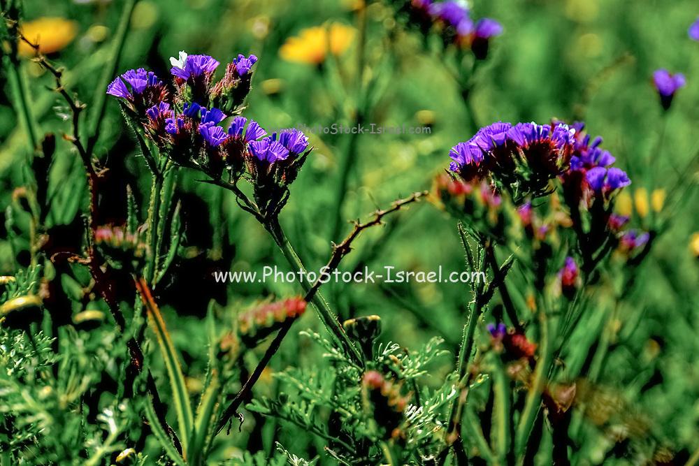 Purple flower close up in a garden
