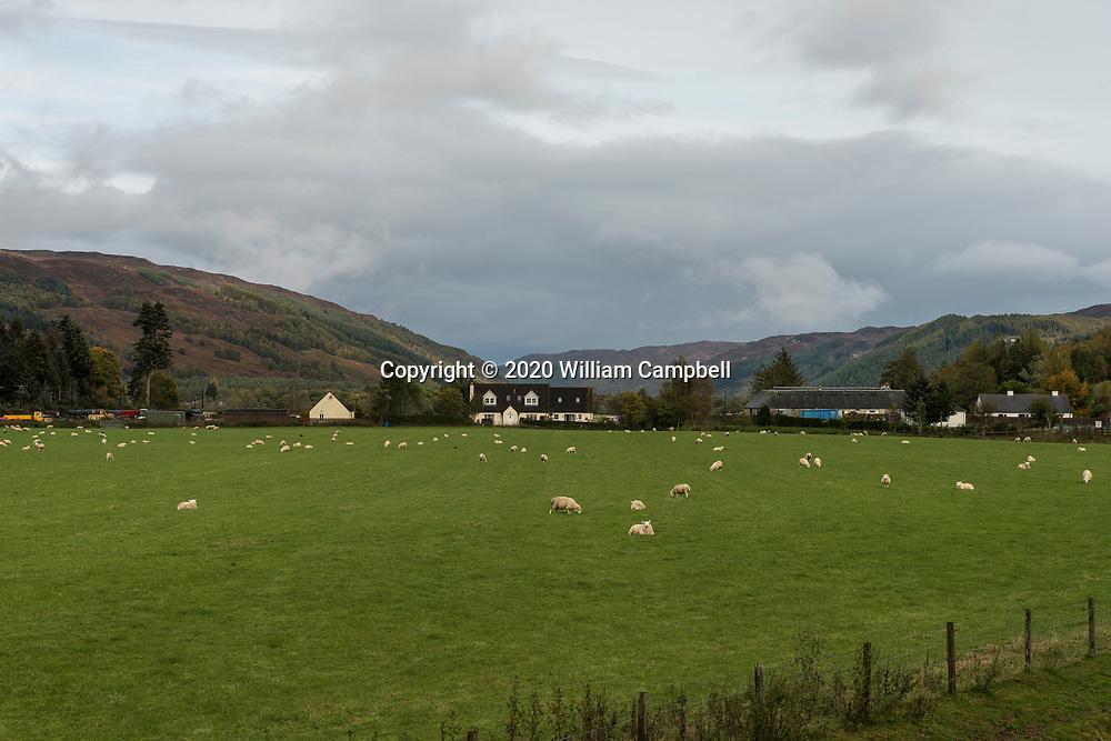 A sheep farm near Tomich, Invernesshiire, Scotland.