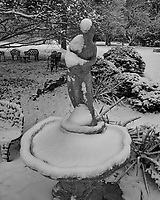 Snow covered bird bath. Image taken with a Fuji X-T1 camera and 16 mm f/1.4 lens (ISO 200, 16 mm, f/8, 1/160 sec). Raw image processed with Capture One Pro (including conversion to B&W).