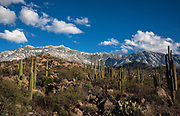 The snow-capped Santa Catalina Mountains provides a backdrop for the rock gardens in the foothills in the Coronado National Forest, Sonoran Desert, Catalina, Arizona, USA.