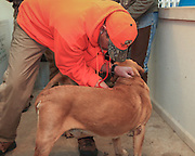 A Hunter Examines His Dog After A day in the Field