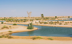 View of Al Qudra lakes desert oasis, a manmade system of lakes and ponds , in Dubai United Arab Emirates