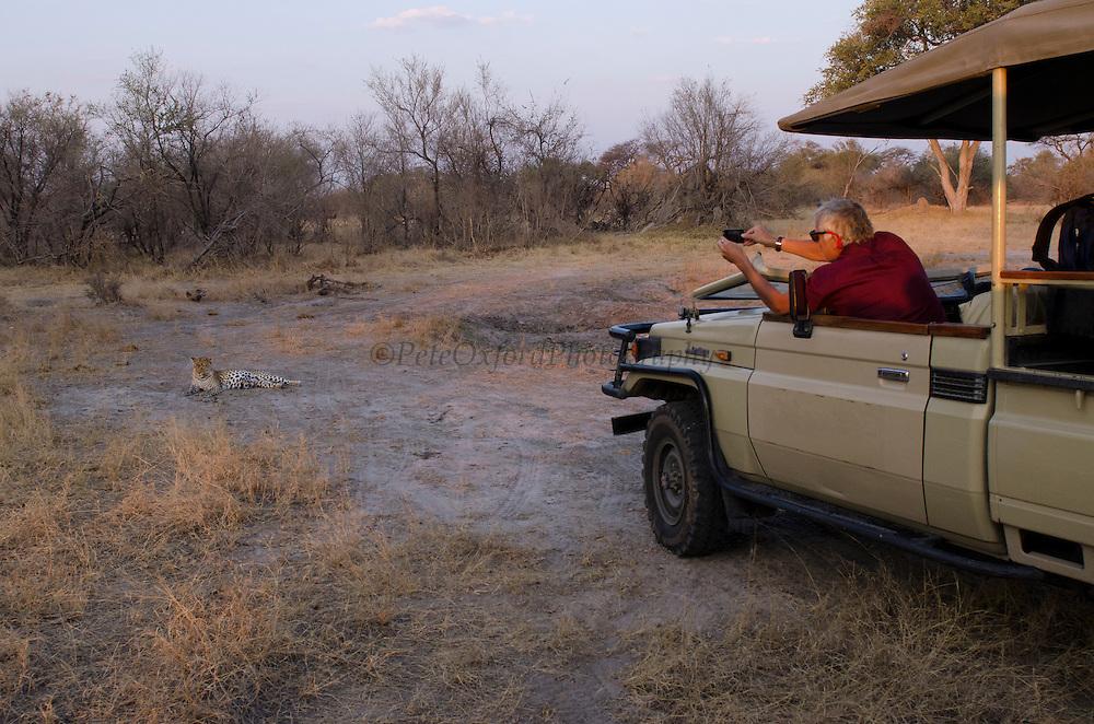 Leopard ((Panthera pardus) & Tourists<br /> Moremi Game Reserve, Okavango Delta<br /> BOTSWANA<br /> RANGE: Sub-Saharan Africa. Fragmented populations in Pakistan, India, Sri Lanka, Indochina, Malaysia, and China.<br /> IUCN: Near Threatened