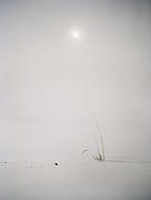 Travels in the Gobi desert region.