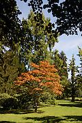 Lindenhofpark, Lindau, Bodensee, Bayern, Deutschland