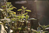 Detail of plant in garden with winter sunlight, garden table in background