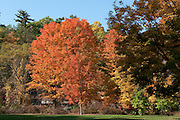 The bright colors of fall show in the leaves in the Finger Lakes Region of New York State.