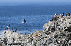 PRETORIA, Feb. 4, 2019  In this file photo taken on Sept. 30, 2018, people view a whale during annual Hermanus Whale Festival in Hermanus, Western Cape, South Africa. South Africa is willing to have more Chinese visitors and is striving to make their travel easier and more enjoyable, South African Minister of Tourism Derek Hanekom said in a Chinese New Year celebration held by the Chinese embassy on Sunday. (Credit Image: © Xinhua via ZUMA Wire)