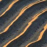 Wave-formed ripple marks in a sandbar exposed at low tide, Cape Henlopen State Park, Lewes, Delaware