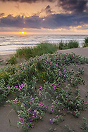 Sunset and clouds over plants on sand dunes at Clam Beach, near McKinnleyville, Humboldt County, California