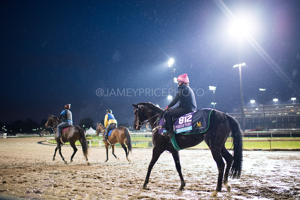November 1-3, 2018: Breeders' Cup Horse Racing World Championships. Marie's Diamond (IRE)