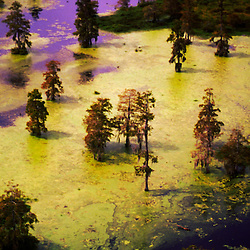Swamp land & Cypress Trees outside Baton Rouge Louisiana, hurricane laura