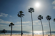 Palm Tree Silhouettes at Manhattan Beach Pier