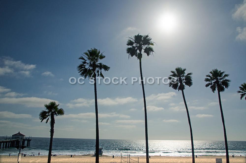 Palm Tree Silhouettes at Manhattan Beach Pier