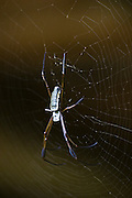 A spider on its web in Manu National Park, Madre de Dios, Peru.