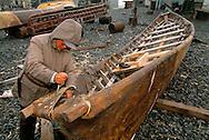 Yupik eskimo building a traditional Baidara, Walrus skin whaling boat, Uelen, Chukotka, Siberia , Russia, Arctic