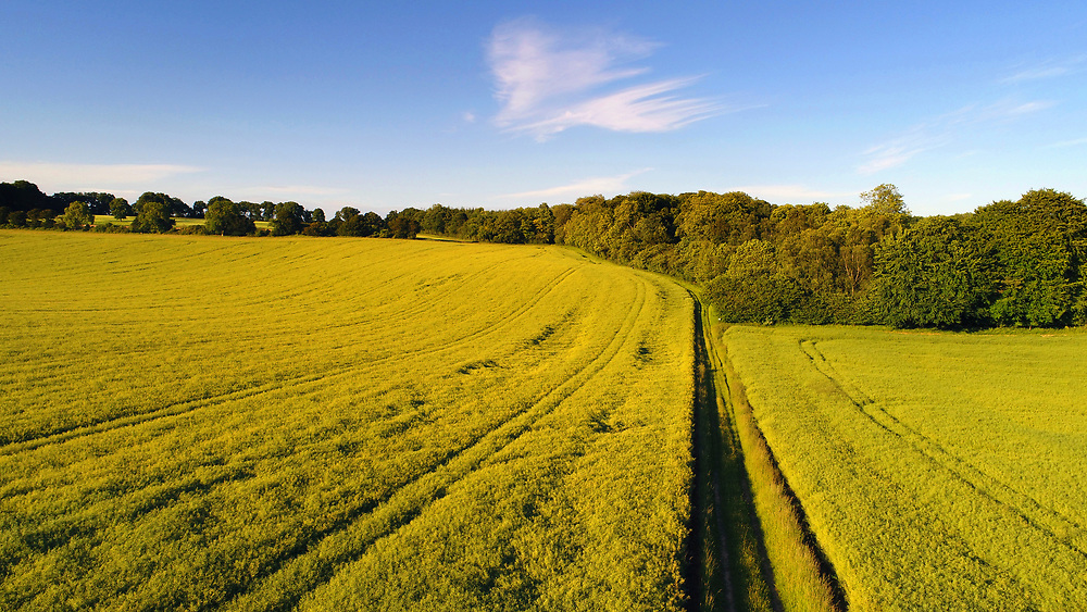 Arable Crops at Andover Down, Test Way, Hampshire