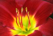 Bright colored center of flower at Memphis Botanical Garden.