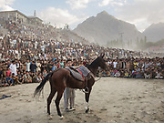 A polo horse. Pakistan's Independance Day celebration (14th August), on the Polo ground in Skardu town, Baltistan region.