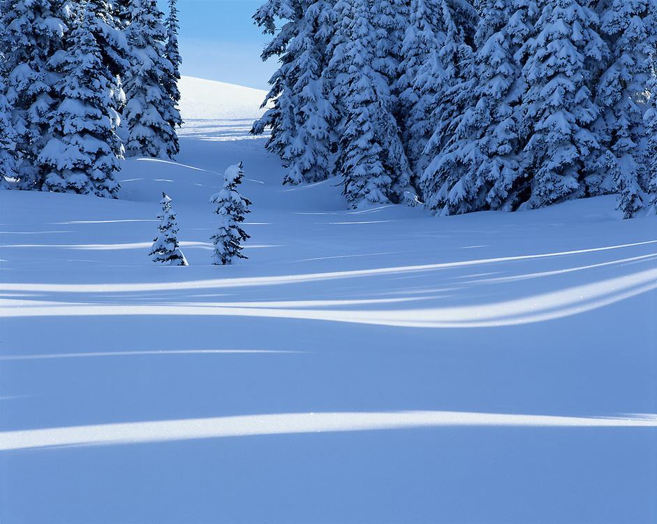 Winter design, Reflection Lakes area, Mount Rainier National Park, Washington, USA