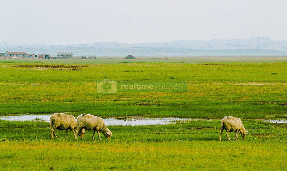 August 22, 2017 - Inner Mongolia, Inner Mongolia, China - XilinGol CHINA-22nd August 2017: (EDITORIAL USE ONLY. CHINA OUT)..Scenery of XilinGol Grassland in north China's Inner Mongolia Autonomous Region. (Credit Image: © SIPA Asia via ZUMA Wire)