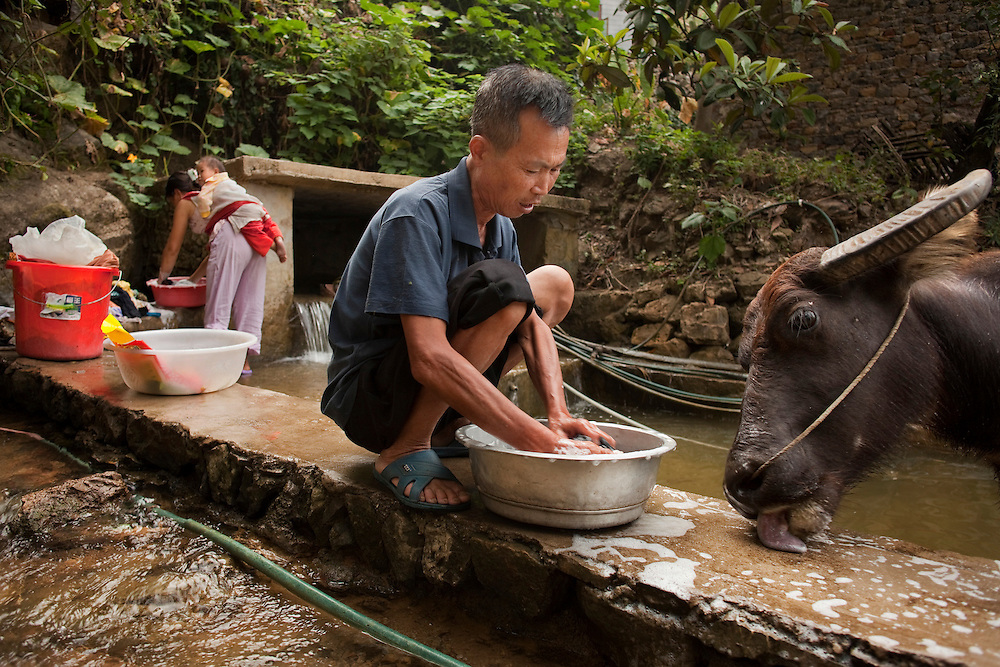Wei Xinyuan spends much of his days with his three water buffalo.  In the morning he takes them to bathe in the communal basin while he washes his clothes. He is proud of his livestock. He and Lu sleep above their stable so that no one can steal their prized possessions.
