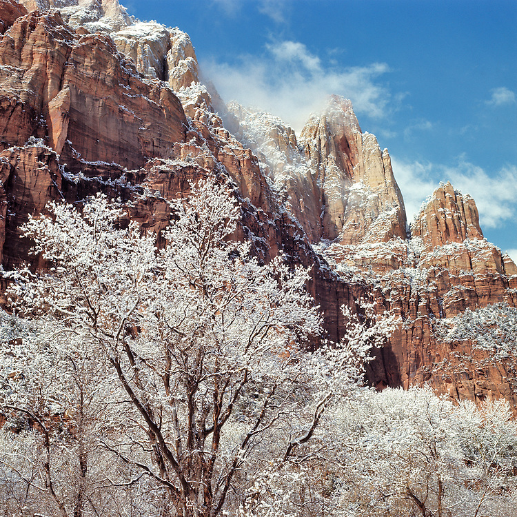 A clearing winter storm dresses the trees and rock ledges of Utah's Zion National Park with a dusting of fresh snow.