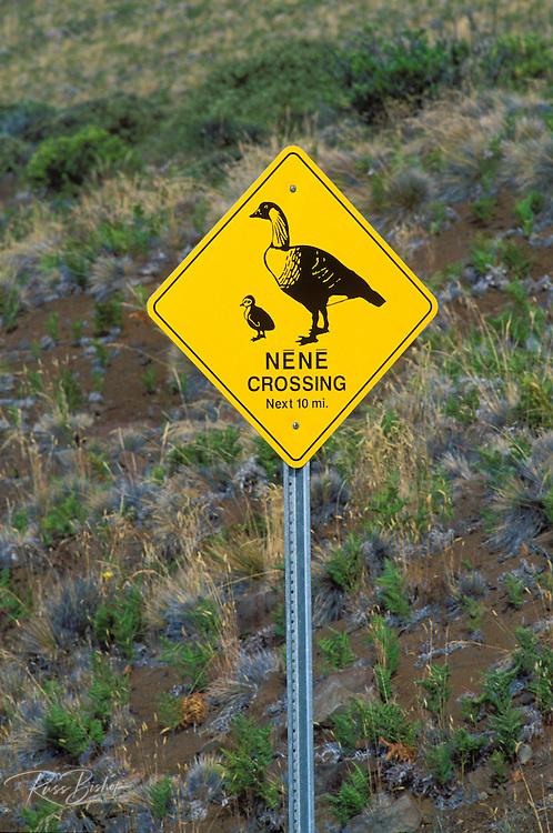 Nene (Hawaiian Goose) crossing sign on the road to Haleakala Crater, Haleakala National Park, Maui, Hawaii