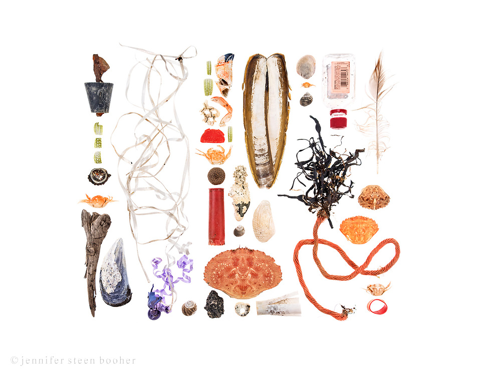 Top to Bottom, Left to Right:  Row 1: metal rod in plastic plug, sea urchin test fragments, bottle cap, Green Crab (Carcinus maenus), driftwood, Blue Mussel (Mytilus edulis)  Row 2: balloon fragment with ribbons  Row 3-5: sea urchin fragments, crab claws, Northern Rock Barnacles (Semibalanus balanoides), plastic taillight fragment, Green Crab, acron cap, stone crusted with Coralline (Corallina officinalis), Razor Clam (Ensis directus), plastic shotgun shell, Common Periwinkle (Littorina littorea), False Angelwing (Petricolaria pholadiformis), Jonah Crab (Cancer borealis), asphalt chunk, Barnacle, shotgun wadding  Row 6: Slipper Shell (crepidula fornicata), Green Crab, Periwinkle, Rockweed attached to lobster trap rope (Ascophyllum nodosum)  Row 7: plastic liquor bottle (Fireball Cinnamon Whisky), Green Crab  Row 8: feather, Green Crabs, lobster claw band