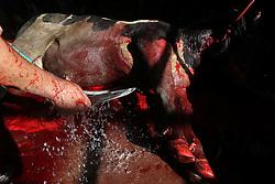 24.09.2015, Gaza city, PSE, Islamisches Opferfest Eid al Adha, im Bild Es wird zum Höhepunkt des Haddsch gefeiert, der Wallfahrt nach Mekka, beginnt jährlich am Zehnten des islamischen Monats Dhu l-Hiddscha und dauert vier Tage // Palestinian Muslims sacrifice animals on the first day of of Eid al-Adha or the feast of sacrifice, in Gaza city on September 24, 2015. Muslims across the world are celebrating the annual festival of Eid al-Adha, or the Festival of Sacrifice, which marks the end of the Hajj pilgrimage to Mecca and in commemoration of Prophet Abraham's readiness to sacrifice his son to show obedience to God, Palestine on 2015/09/24. EXPA Pictures © 2015, PhotoCredit: EXPA/ APAimages/ Mohammed Asad<br /> <br /> *****ATTENTION - for AUT, GER, SUI, ITA, POL, CRO, SRB only*****