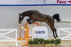 120, Notorious<br /> KWPN Hengstenkeuring 2021<br /> © Hippo Foto - Dirk Caremans<br />  03/02/2021