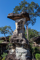 """Sao Chaliang are natural sculptures made of sandstone said to be thousands of years old.  The """"mushroom"""" shapes have been formed by wind and rain for centuries.  Its name comes from the Thai word """"sa liang"""" which means stone pillar.  Geologists believe that it is the remains of a dried up ocean over a million years ago. The park's distinguishing feature is its unusual rock formations around which religious shrines have been constructed. Some formations also feature prehistoric rock paintings"""