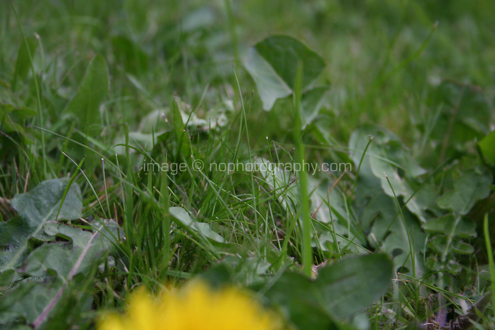 Detail of grass and weeds