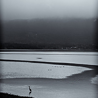 Morning Fog - Sequim Bay<br />editted & converted to B&W 4/28/20 Printed 1/1 5/22/2020