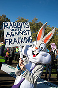 Demonstration in Parliament Square called by Extinction Rebellion to protest the government's inaction on climate change and calling for a mass rebellion and civil disobedience on 31st October 2018 in London, United Kingdom. A person dressed as a rabbit holds a sign saying Rabbits unite against fracking.