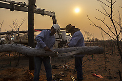 """SANTA CRUZ, BOLIVIA - AUGUST 24 : Two electrical local workers repair an electric power pole, where a forest fire took place in the Chiquitania region, the largest tropical dry forest eastern Bolivia on August 24, 2019. More than 750,000 hectares of forest have been turned into ashes during the latest days, according to the Bolivian Government. The fires have hit the country's Amazon side — with an 83% increase on last year. Brazil and Bolivia are under """"extreme risk"""" from forest fires. MARCELO PEREZ DEL CARPIO / Anadolu Agency/ABACAPRESS.COM  