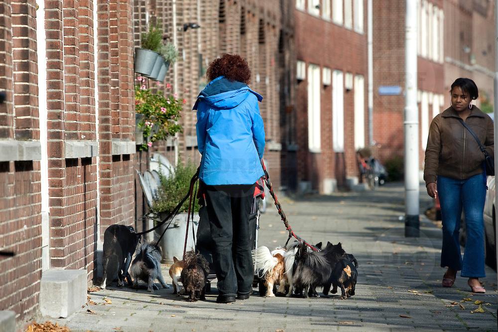 Nederland Rotterdam 10 oktober 2008 20081010 Foto: David Rozing ..Vrouw laat haar honden 10 honden uit in Rotterdam Charlois (Zuid), 2 van de honden zitten in een kinderwagen. ..