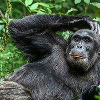 Fotoreise Primate Tour