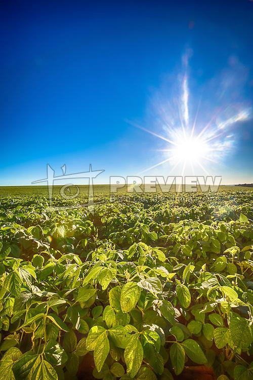 Lavoura de soja, em Campo Mourão no Paraná. FOTO: Jefferson Bernardes/ Agência Preview