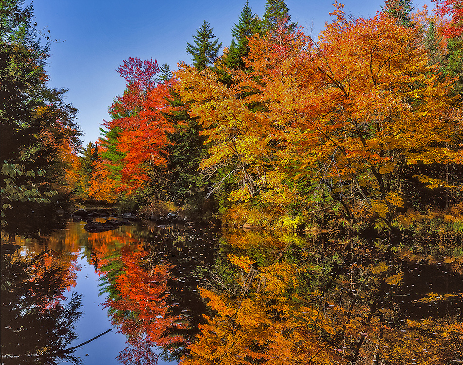 Colorful maple trees & fall foliage reflections in Smith River, Danbury, NH