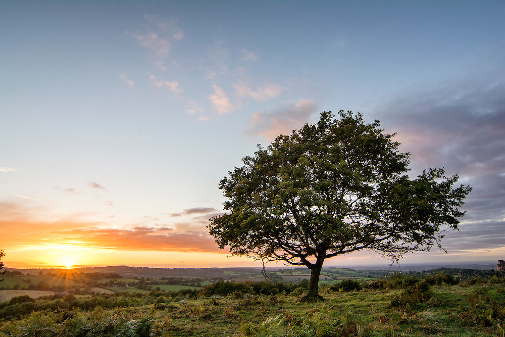 Sun setting behind a tree at Beacon Hill, Leicestershire.