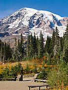 Explore fall foliage colors in Paradise Valley in Mount Rainier National Park, Washington, USA.