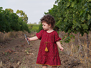 Toddler girl plays outdoors in citrus tree orchard